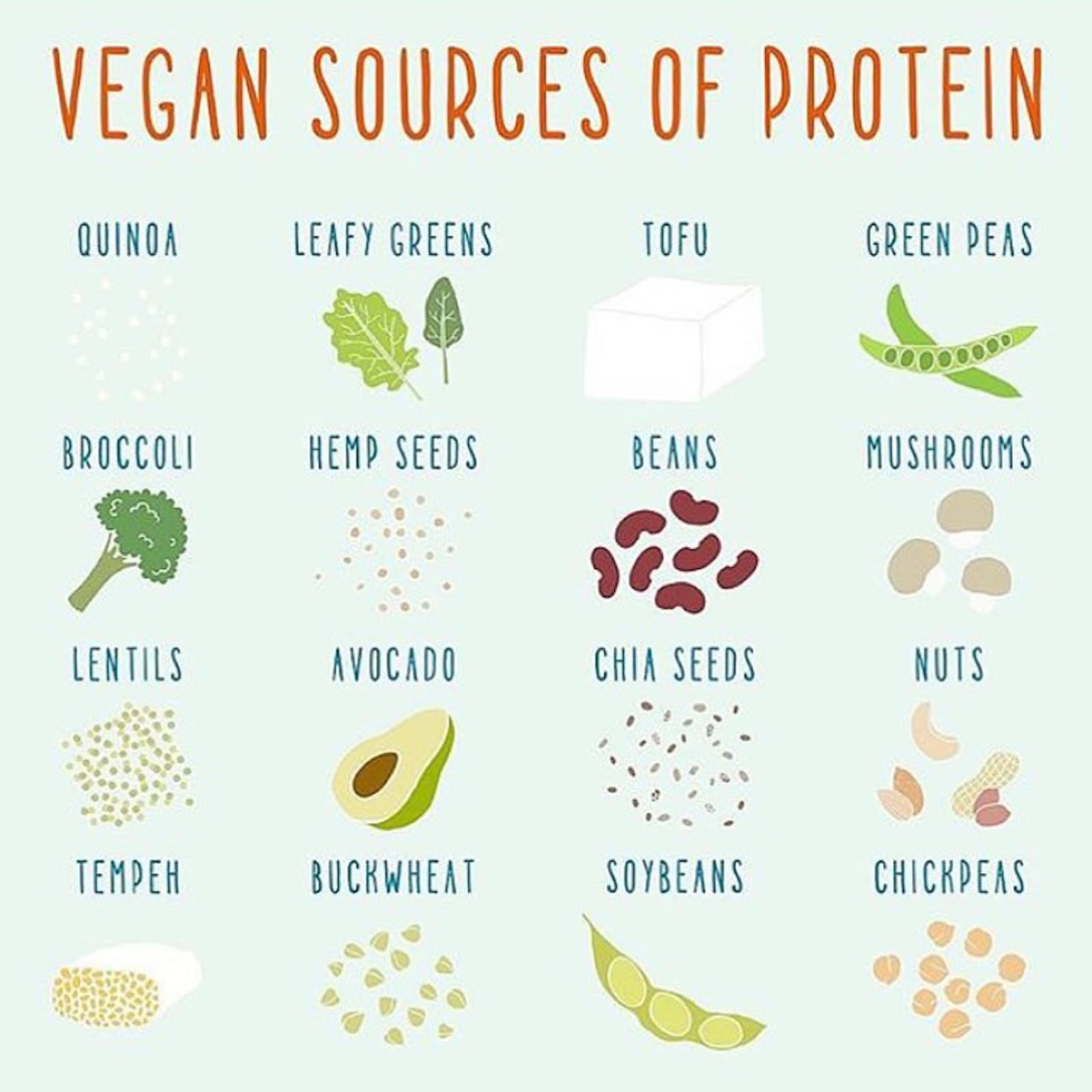 Vegan Protein List  Protein on a low FODMAP Vegan Diet