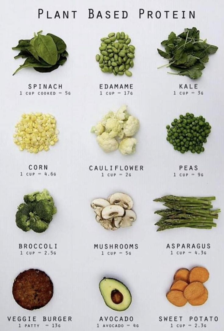 Vegan Protein Sources Plant Based  Plant based protein