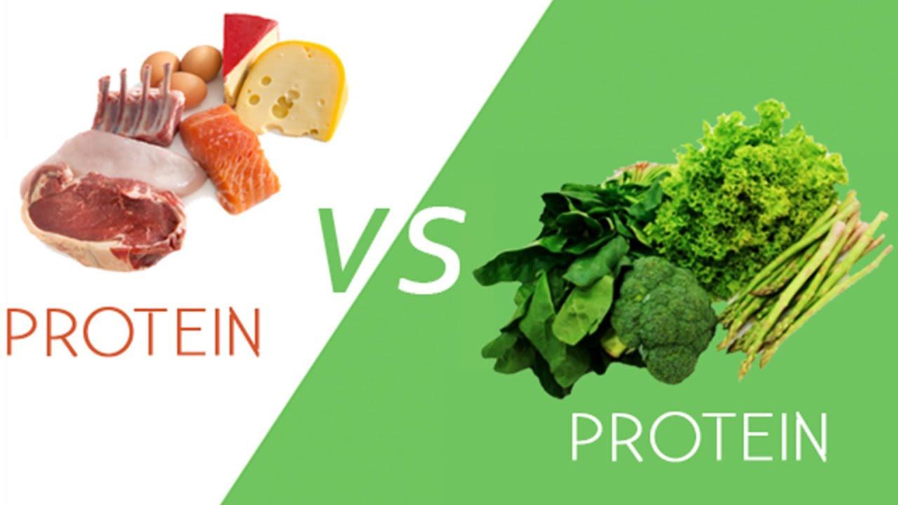 Vegan Protein Vs Animal Protein  Animal vs Plant Protein