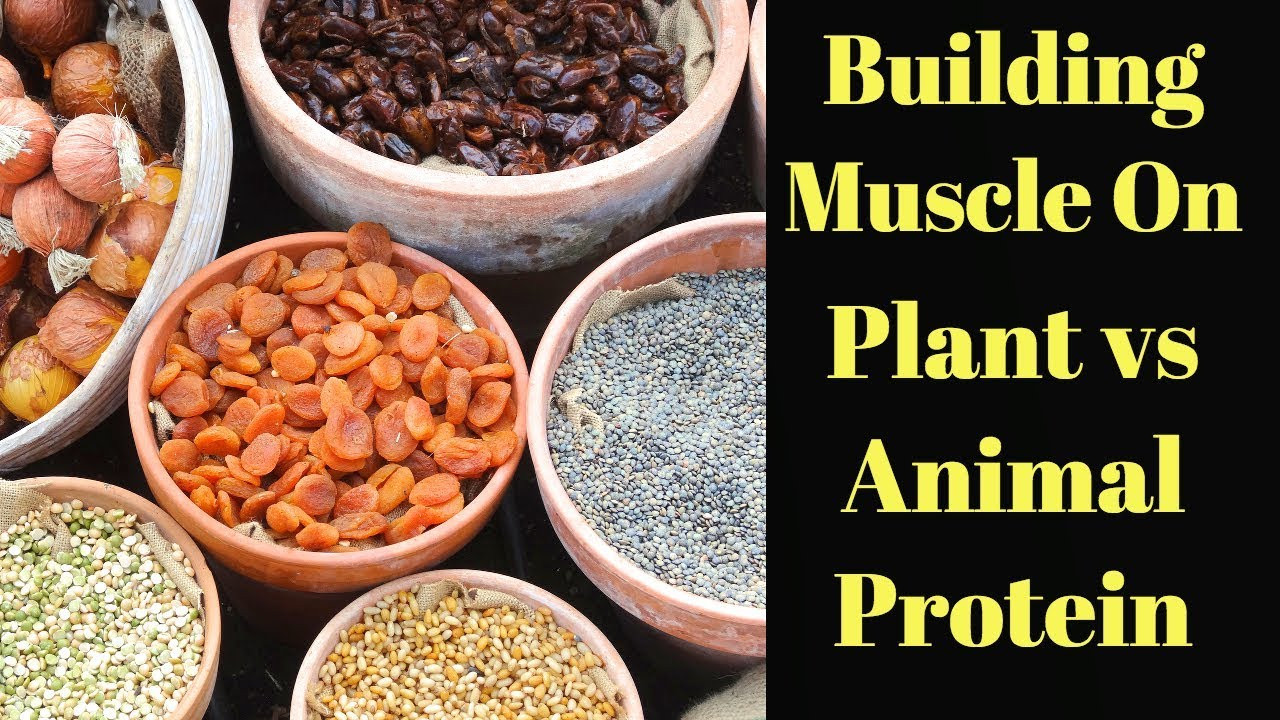 Vegan Protein Vs Animal Protein  Vegan Protein vs Animal Protein Which Builds More Muscle